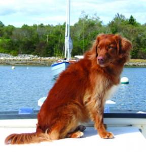 Dory - Boat Yard Dog